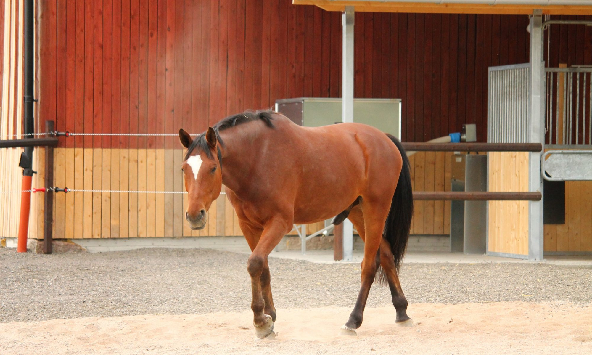 Hesselby gård Active stable